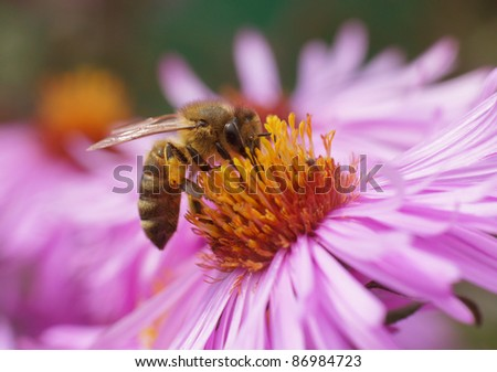 The bee collects pollen from a flower