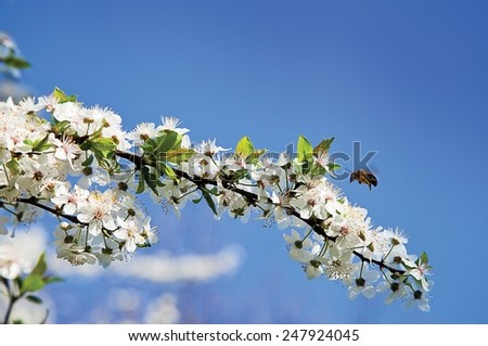 The bee that flies over a blossoming - stock photo