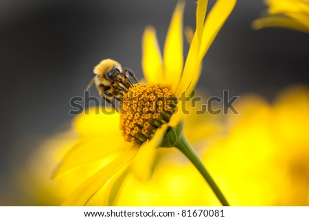 The bee working on the flower