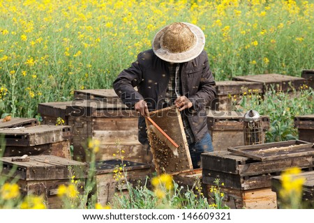 The beekeeper in the field of flowers. - stock photo