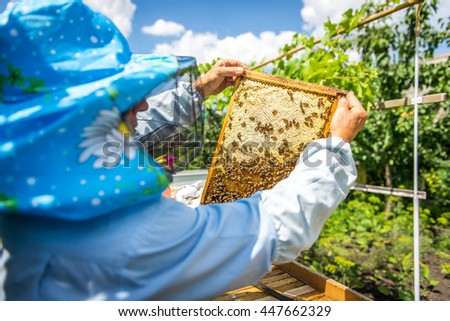 The beekeeper opens the hive, the bees checks, checks honey. Beekeeper exploring honeycomb. - stock photo