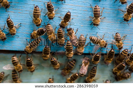 The bees and the queen bee on the comb - stock photo
