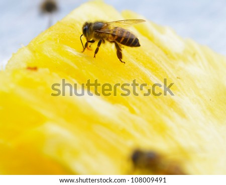 The bees suck nectar from Pineapple. - stock photo