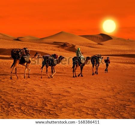 The Berbesky tribe passes the desert in Africa - stock photo