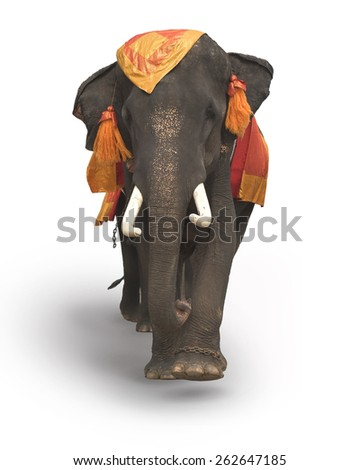 The Big Elephant isolated on white background. This has clipping path - stock photo