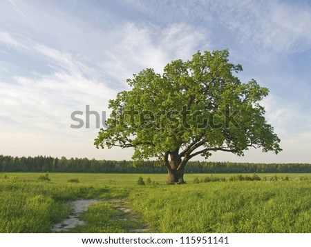 The big lonely oak  tree on a green meadow against the  cloudy blue sky. - stock photo
