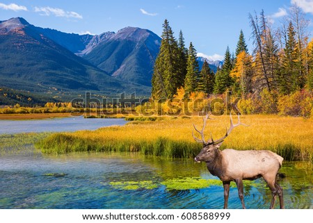 deer lake hindu personals Book flight from deer lake to patna now and get the best priced air ticket online we offer cheapest airfare to patna from deer lake your ticket is backed by wbpg.