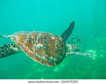 The Big Turtle - stock photo