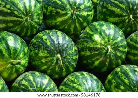 The big watermelons on the background. The background closeup - stock photo