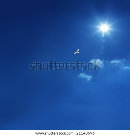 the bird is flying in peace full blue sky - stock photo