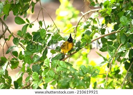 The bird on branch - stock photo
