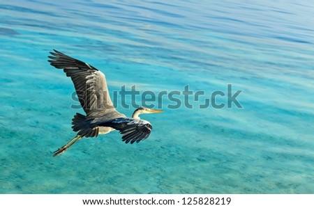 The Bird's Flight, Maldives, The Indian Ocean - stock photo