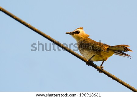 The bird stand on power line isolated on blue - stock photo