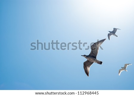 the birds are flying in peace full blue sky - stock photo