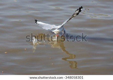 The birds fly out of tricky flying beautifully .  - stock photo