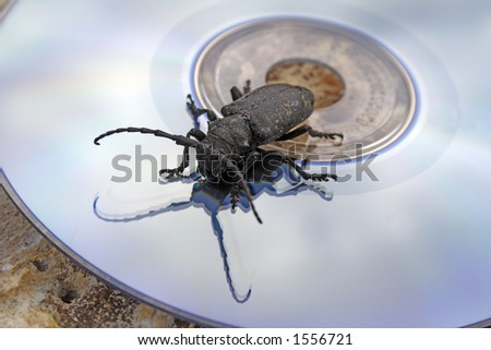 The black bug on a laser disk - stock photo