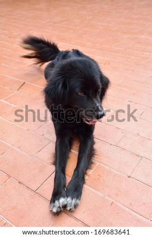The black dog - stock photo