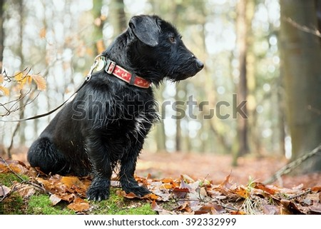 the black dog in the forest