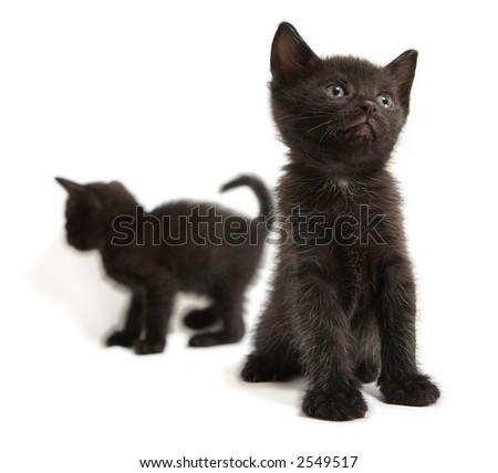 The black kitten looks upward - stock photo