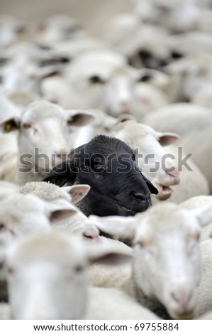 the black sheep in the group - stock photo