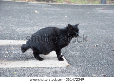 the black stray cat in a park, Japan