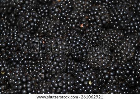 The blackberry. Many blackberry. Blackberry background  - stock photo