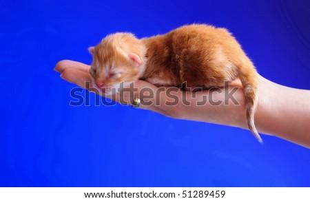 The blind kitten sleeps on a palm - stock photo