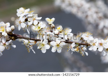 The blossom in spring