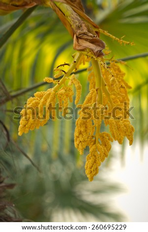 The blossoming palm trees - stock photo