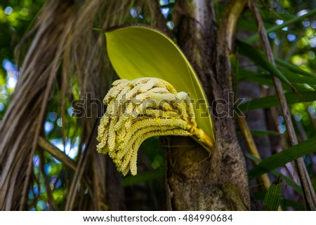 Blossoming palm trees yellow flower yellow stock photo edit now the blossoming palm trees yellow flower yellow palm tree flower a botanical family mightylinksfo