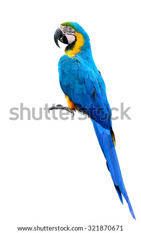 The Blue and Gold macaw bird on the log isolated on white background, beautiful blue parrot bird