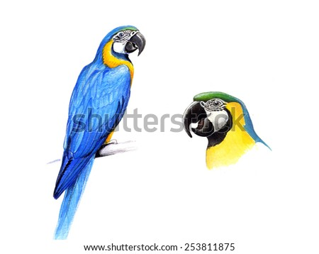 The blue-and-yellow macaw (Ara ararauna)
