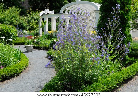 The blue flowers of Summer Forget-Me-Not in a nicely landscaped garden. Footpath, pergola and flower pot - stock photo