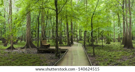 The boardwalk and a bench that runs through the cypress forest and swamp of Congaree National Park in South Carolina.