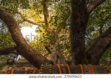 The Bodhi tree with stupa on background, which the Buddha became enlightened located at BodhGaya, India - stock photo