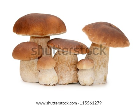 The boletus edulis isolated on white background - stock photo