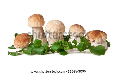 The boletus edulis isolated on white background