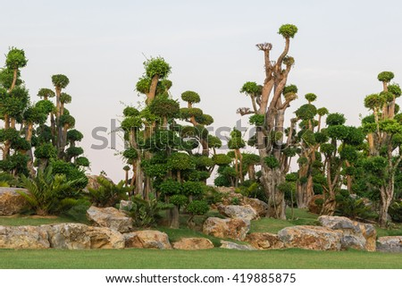 The bonsai trees in garden with white background - stock photo