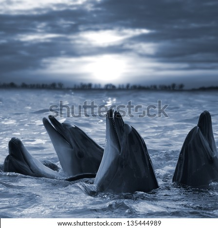The bottle-nosed dolphins in sunset light - stock photo