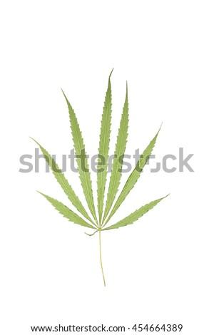 The bottom of dried marijuana leave on white background. - stock photo
