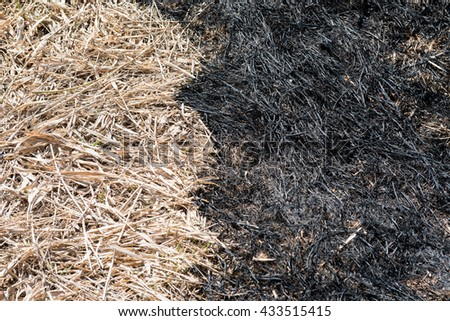 The boundary between the burnt and dry grass - stock photo