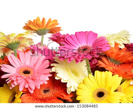 The bouquet gerbera flower as a background - stock photo