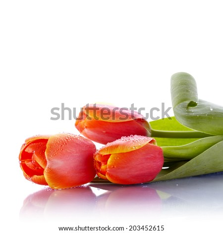 The bouquet of red tulips lies on a white background