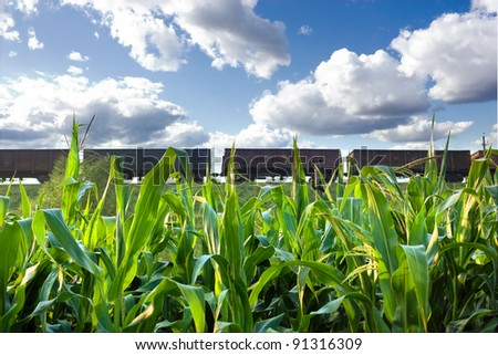 The boxcars of a freight train with corn field in the foreground. It is a clear summer afternoon. - stock photo