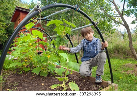 the boy at the greenhouse with cucumbers - stock photo