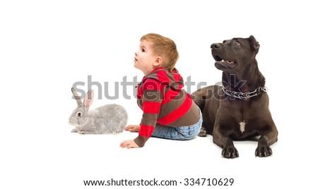 The boy, dog and rabbit sitting together isolated on white background - stock photo