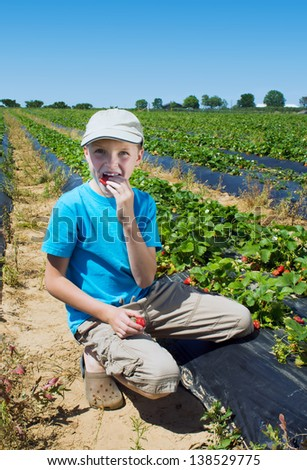 The boy eating strawberries on the field with the beds - stock photo
