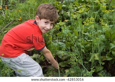 The boy in a garden breaks beet - stock photo
