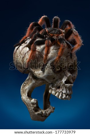 The Brachypelma klaasi (Mexican Pink Tarantula) is a tarantula endemic to Mexico. - stock photo