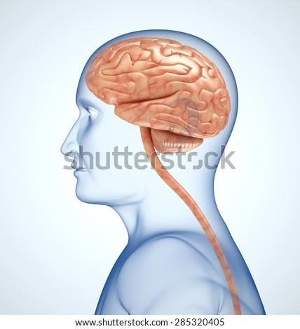 The brain in the transparent head on the light-blue background - stock photo